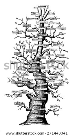 Family tree of life on earth, vintage engraved illustration. Earth before man - 1886. - stock vector