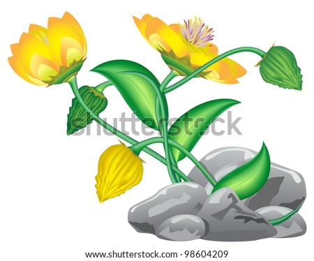 fantasy flower growing from rocks isolated on white - stock vector