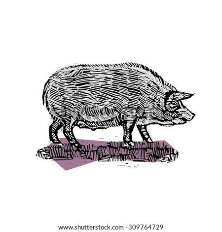 farm animal pig vintage vector engraving illustration - stock vector