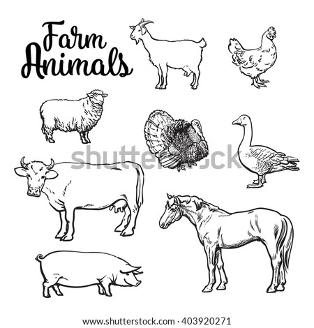 Farm animals, cow, pig, chicken, goose, poultry, livestock, color vector illustration, sketch style with a set of animals isolated on white background, realistic animal products for sale - stock vector