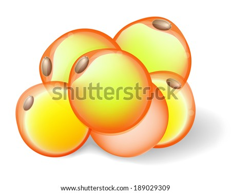 Fat Cells from white adipose tissue.  adipocytes. Vector diagram - stock vector