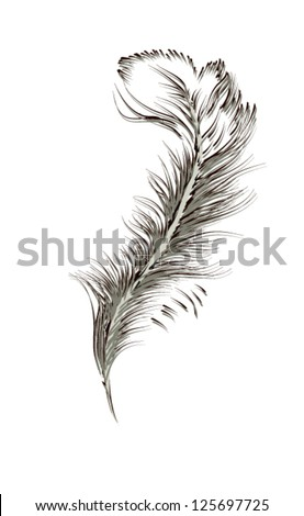 feather of a bird  vector  Bird Feathers Drawing
