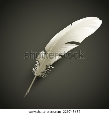 Feather. Vector illustration - stock vector