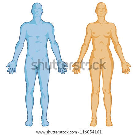 Female male body shapes � human body outline � vector - anterior view - full body - stock vector