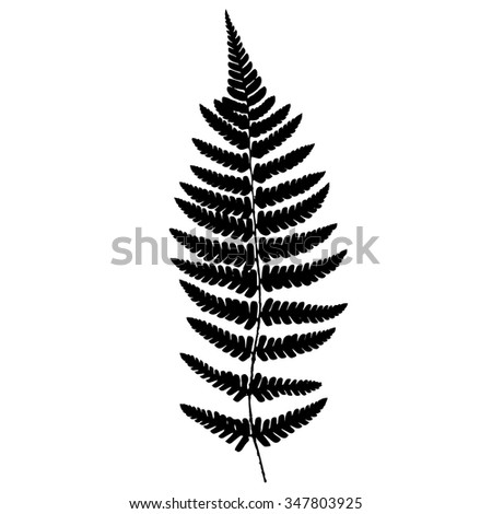 Fern frond black silhouette. Vector illustration