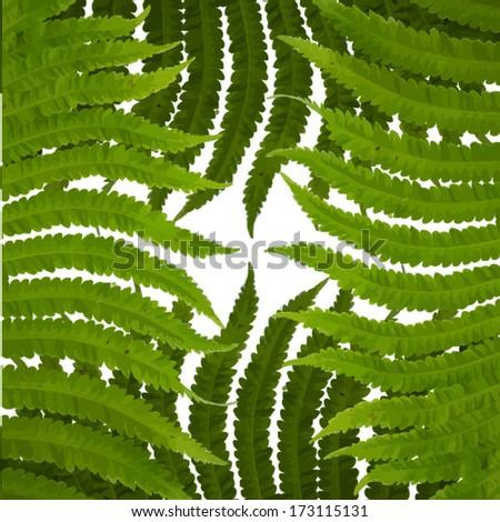 fern leaves. vector - stock vector