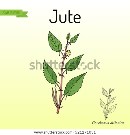 Jute Leaf Stock Images, Royalty-Free Images & Vectors ...