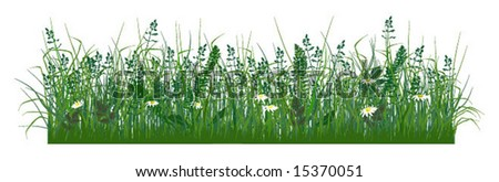 Field grass and daisies, pictured in the front projection - stock vector