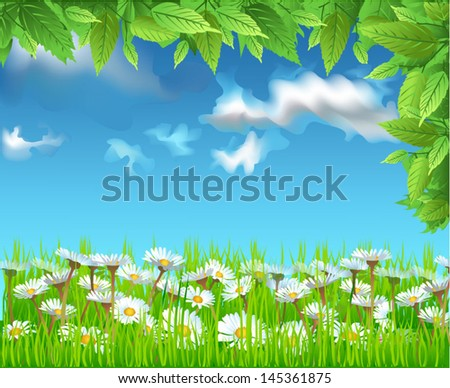 field of daisies - stock vector