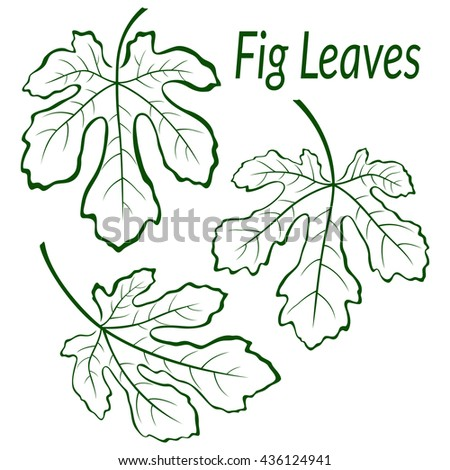 Fig Tree Green Leaves Set, Outline Contour Pictograms Isolated on White Background. Vector