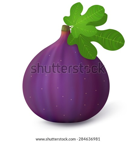 Fig with leaves on a white background. Vector illustration. - stock vector