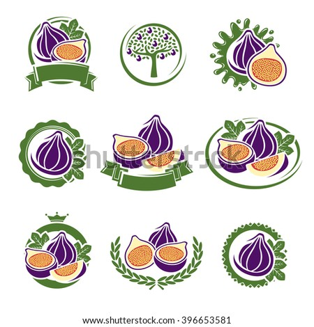 Figs labels and elements set. Vector  - stock vector
