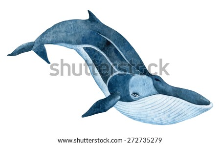 fin whale - hand drawn watercolor vector illustration - stock vector