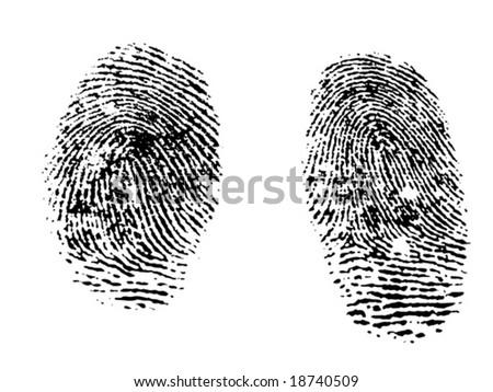 Fingerprints - stock vector