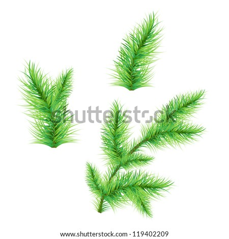 Fir-Tree Branch Isolated On White Background, Vector Illustration