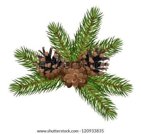 Fir tree branches and cones. Vector illustration. - stock vector