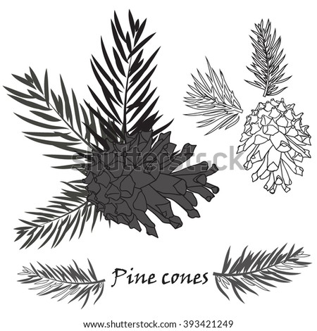 Fir tree branches with pine cone Black silhouette on white background. Vector illustrations