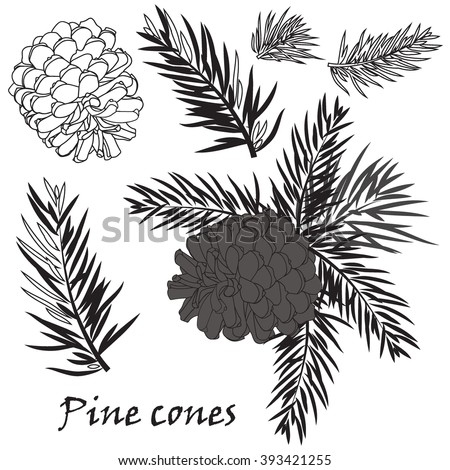 Fir tree branches with pine cone Black silhouette on white background. Vector illustrations - stock vector