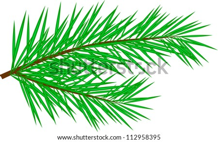 Fir twig isolated on white, vector illustration - stock vector