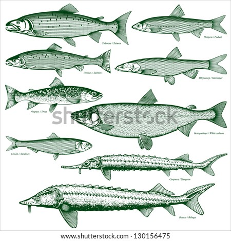 Freshwater fish 5 letters freshwater pompano aquarium for Types of freshwater fish
