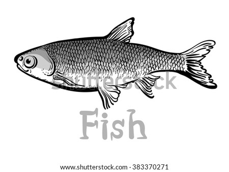 Fish,graphic design,black and white,fish cartoon, fish image,fish vector,fish art,fish design,fish market,saltwater fish,freshwater fish,types of fish,fish icon,fish sing,fish text,fish,letter  - stock vector