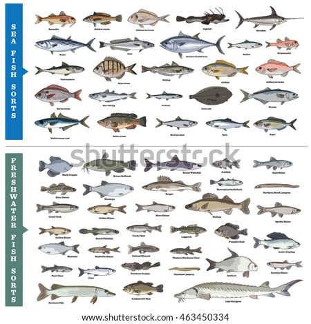 Fish sorts types seawater freshwater fish vector de for 7 fishes list