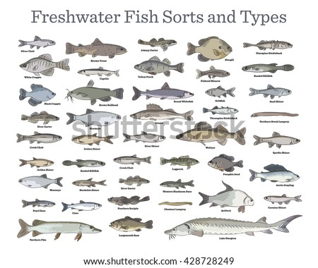 Fish sorts and types. Various freshwater fish. Hand drawn vector illustrations of different inland fish sorts.