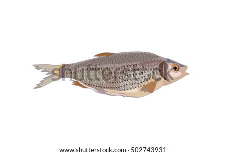 Fish. Vector illustration