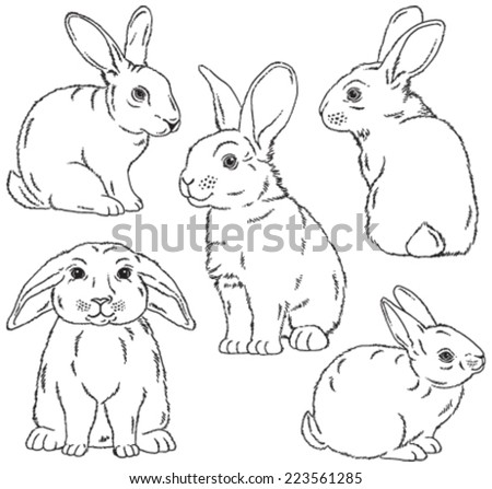 Five black and white sketches of cute rabbits sitting in various poses. Vector Illustrations. - stock vector