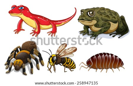 Five different types of small animals - stock vector