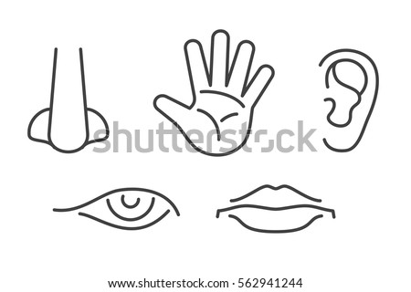 Five Senses Vector Icons Set Isolated Stock Vector ...