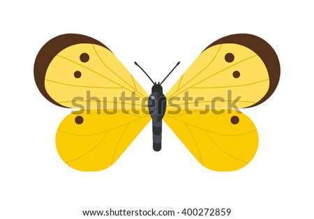Flat butterfly vector. Flat butterfly isolated on white background. Flat butterfly vector illustration. Colored flat butterfly isolated on white background. Butterfly isolated. Butterfly cartoon style - stock vector