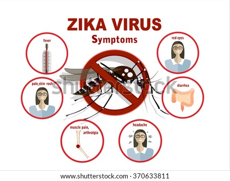 Flat design illustration concepts Zika virus symptoms infographics with figures and text     - stock vector