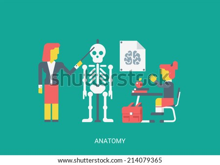 Flat style vector illustration biology anatomy lesson education study knowledge concept. School teacher pointer skull skeleton brain poster student pupil stretches hand sitting table. Flat collection. - stock vector