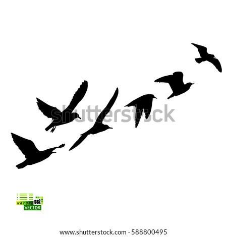 Bird Silhouette Stock ...
