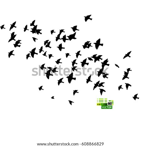 Flock Stock Images, Ro...