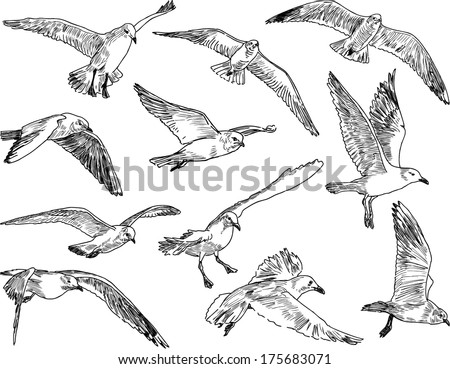 flock of seagulls - stock vector