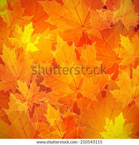 floral autumn (fall) background with maple leaves  - stock vector