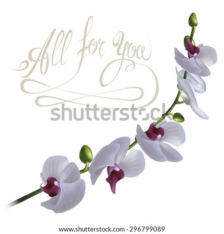 Floral background. The branch of orchid with All For You calligraphic inscription. Fully editable vector. - stock vector