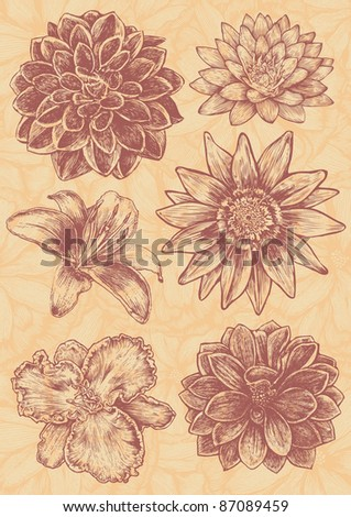 floral design elements set, engraved retro style. vector illustration - stock vector