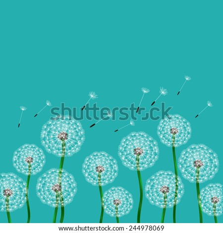 Floral design. Fluffy dandelion for the template card, invitation. poster or brochure. - stock vector
