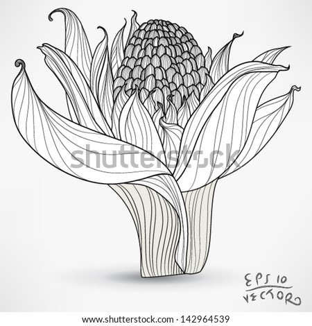 Floral Orchid Elements for design, EPS10 Vector background - stock vector