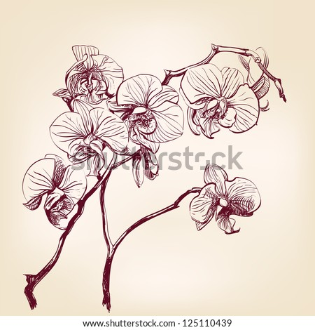 floral orchid hand drawn vector - stock vector