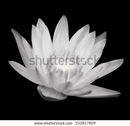 Flower Blossom. Lotus Exotic Plant - stock vector