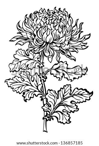 Flower chrysanthemum black and white - stock vector