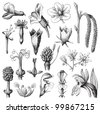 Flower collection / vintage illustration from Meyers Konversations-Lexikon 1897 - stock vector