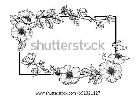 Flower Frame Rose Floral Drawing Sketch Stock Photo (Photo, Vector ...