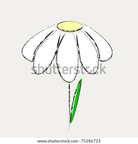 Flower marguerite with one leaf is alone on grey background, vector