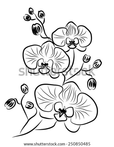 Flower orchid. Vector. - stock vector