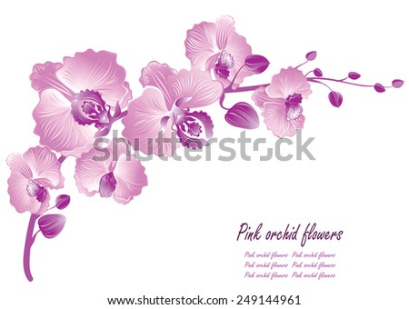 Flower orchid. Vector illustration - stock vector
